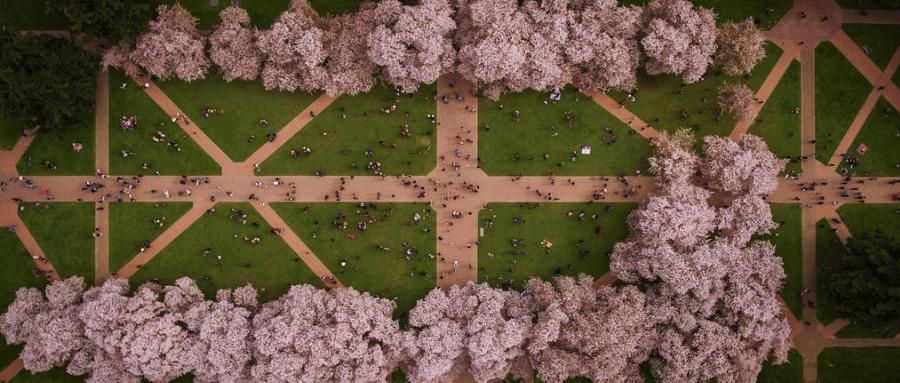 在世界排名前10的UW念书是一种怎样的体验?快来华盛顿西雅图大学和我一起看樱花雨吧!